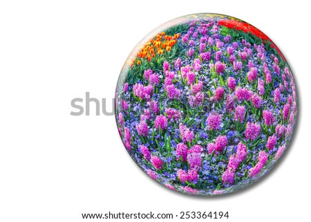 Crystal sphere with pink hyacinths in flowers field isolated on white background