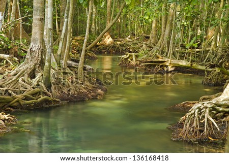 crystal stream, clear freshwater meets with seawater from the mangrove forest, Krabi, Thailand - stock photo
