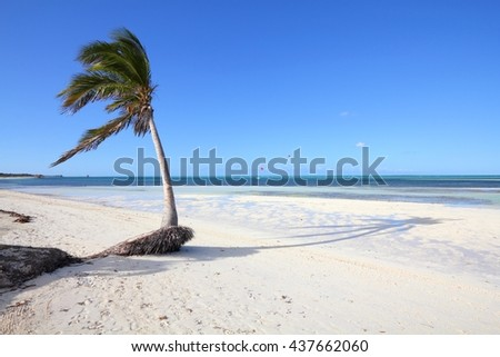 Cuba beach landscape - palm trees in Cayo Guillermo (Jardines del Rey). - stock photo