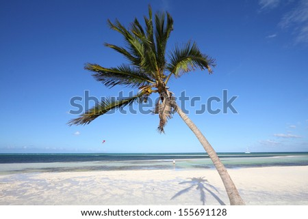 Cuba - Caribbean beach Cayo Guillermo. Sandy coast and coconut palm tree. Jardines del Rey region. - stock photo