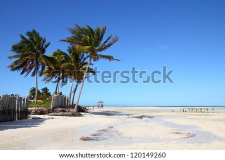 Cuba - Caribbean beach Cayo Guillermo. Sandy coast and coconut palm trees. Jardines del Rey region. - stock photo