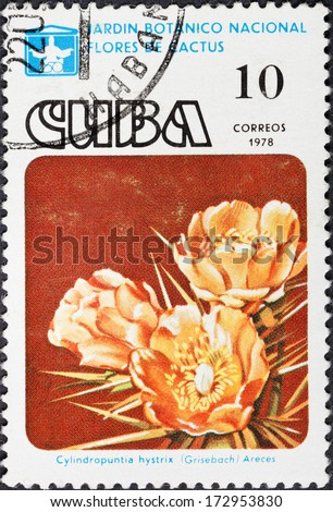 CUBA - CIRCA 1978: A postage stamp printed in the Cuba shows blossoming of Ciylindropuntia hystrix cactus in National botanical garden, circa 1978 - stock photo