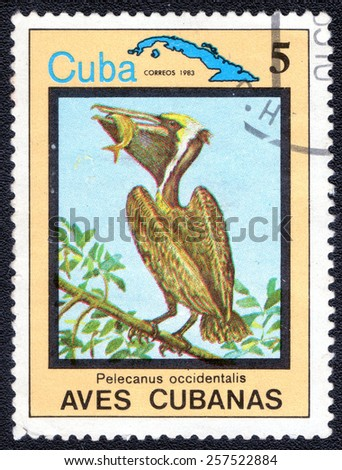 "CUBA - CIRCA 1983:A postage stamp shows Pelicanus occidentalis, from series ""Cuban Birds"", circa 1983 - stock photo"