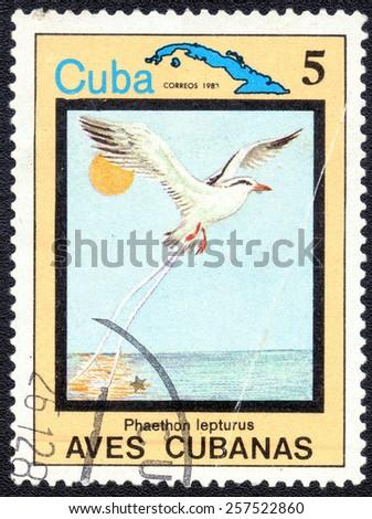 "CUBA - CIRCA 1983:A postage stamp shows Phaethon lepturus, from series ""Cuban Birds"", circa 1983 - stock photo"