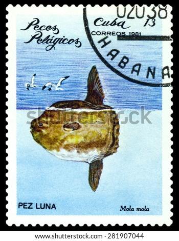 CUBA - CIRCA 1981: a stamp printed by Cuba shows  Beaked whale,  Pelagic Fish,  circa 1981 - stock photo