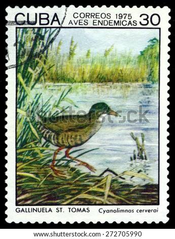 CUBA - CIRCA 1975: A stamp printed by Cuba, shows  bird  Cyanolimnas cerverai, Indigonous Birds, circa 1975  - stock photo
