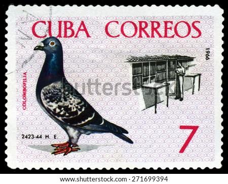 CUBA - CIRCA 1966: A stamp printed by Cuba, shows  Birds. Breder tending coops, Baracoa to Havana championship flight, 1959, circa 1966 - stock photo