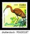 CUBA - CIRCA 1989: a stamp printed by CUBA shows birds, series animals, circa 1989 - stock photo