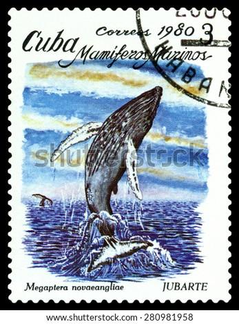 CUBA - CIRCA 1980: a stamp printed by Cuba shows  Megaptera novaeangliae,  Marine  Mammals,  circa 1980 - stock photo