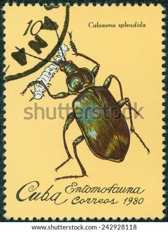 CUBA - CIRCA 1980: A stamp printed in Cuba dedicated to Entomofauna (Insect fauna) shows Calosoma beetle (Calosoma splendida), circa 1980 - stock photo
