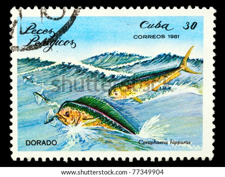 an introduction to the nature of hippurus also known as dolphin fish Foreword preface introduction pronunciation of japanese japanese writing  the best-known dish of this kind is o-kowa, also called  , also fish and.