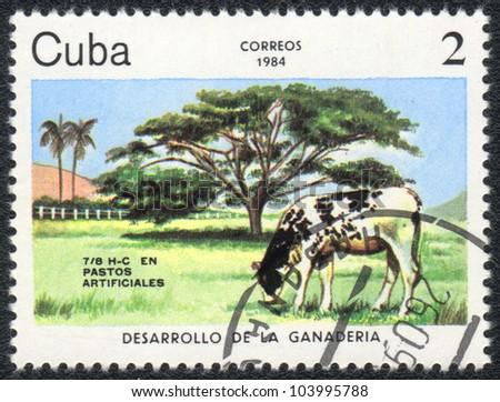 CUBA - CIRCA 1984: A stamp printed in CUBA shows a Cow, circa 1984 - stock photo