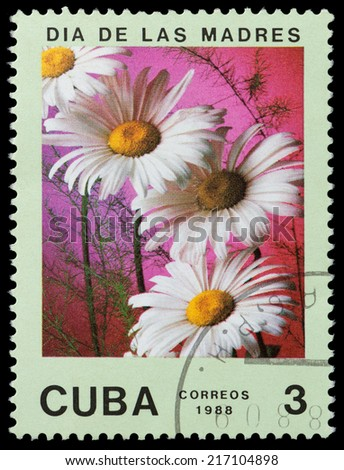 CUBA - CIRCA 1988: A stamp printed in Cuba shows flower chamomile, circa 1988 - stock photo