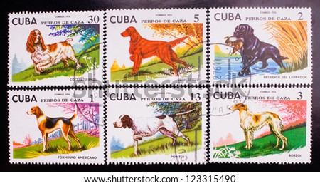 CUBA - CIRCA 1976: A stamp printed in Cuba shows six kinds of colorful dogs in the yard, circa 1976. - stock photo