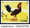 CUBA - CIRCA 1981: a stamp printed in the Cuba shows Cenizo, Fighting Cock, circa 1981 - stock photo