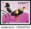 CUBA - CIRCA 1981: a stamp printed in the Cuba shows Giro, Fighting Cock, circa 1981 - stock photo