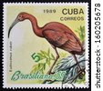 CUBA - CIRCA 1989: A stamp printed in the Cuba, shows the exotic bird, Eudocimus rober, circa 1989  - stock photo