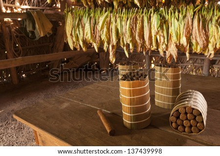 Cuban cigars in drying house, Vinales, Cuba - stock photo