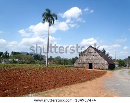 Cuban field and tobacco drying hut, Vinales, Cuba - stock photo