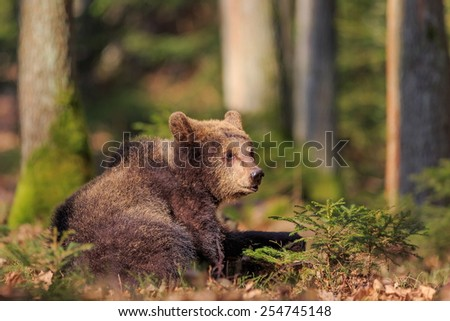 cube bear is resting - stock photo