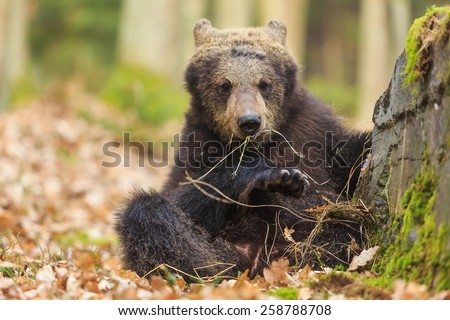 cube bear is sitting next rock - stock photo