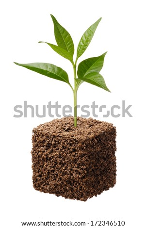 cube shape soil with plant isolated on white - stock photo
