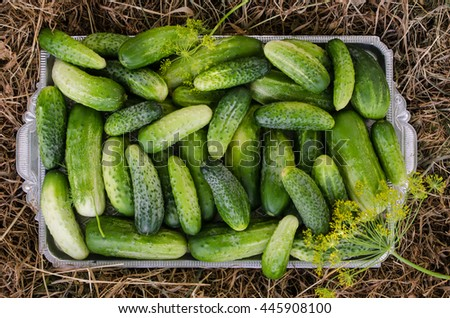 Cucumbers in a tray on a hay background.