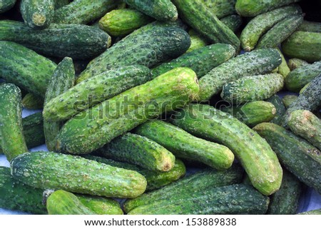 Cucumbers ready for pickling and canning produce