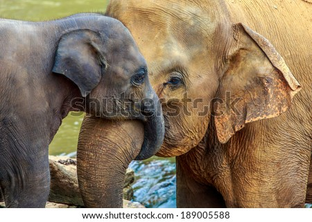 cuddling elephant and baby elephant - stock photo