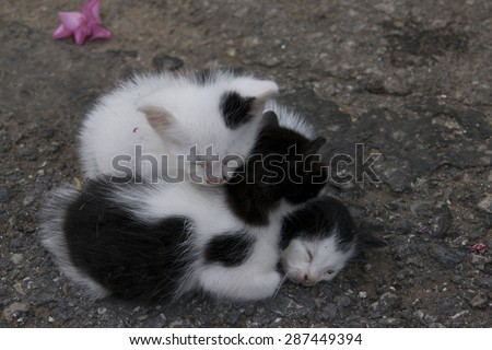 Cuddly Kittens Sleeping On Top of Each Other - stock photo