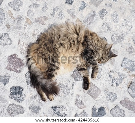 cuddly persian cat on a rock floor - stock photo