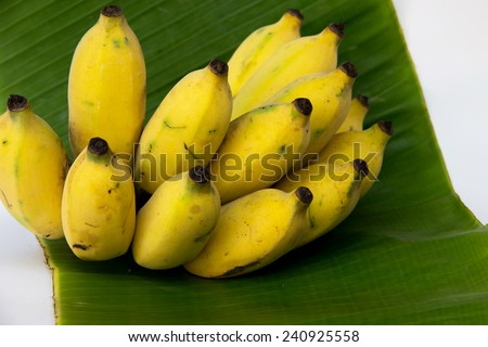 Cultivated Banana on green banana Leaf : For Thai ingredient dessert recipes such as glutinous rice steamed in banana leaf, banana in coconut milk etc. - stock photo