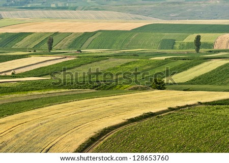 Cultivated fields during summer - stock photo