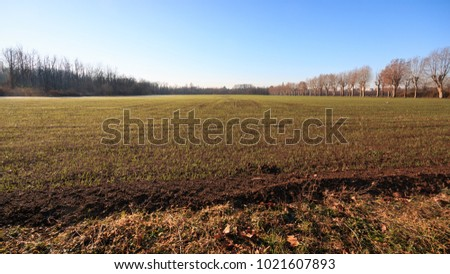 cultivated fields in the Lura park - Lomazzo (Como)