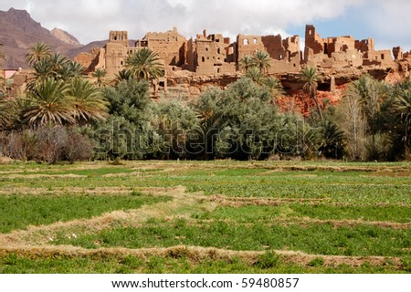 Cultivated green oasis in Tenehir, Morocco - stock photo