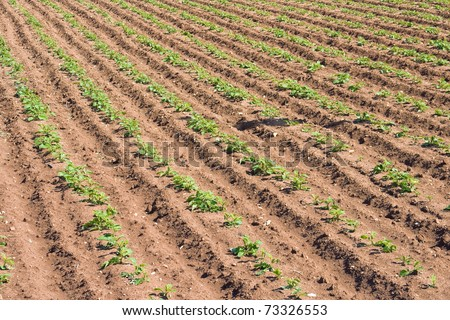 Cultivated land. - stock photo