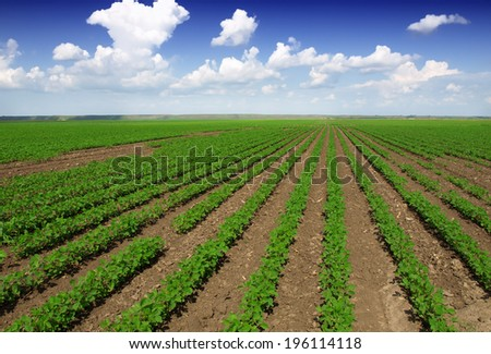 Cultivated land in a rural landscape - stock photo