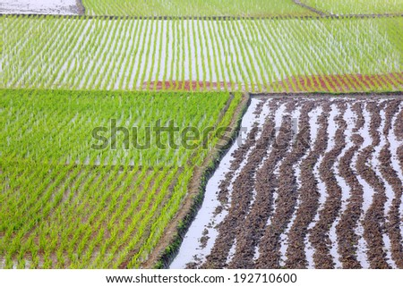 Cultivated land of Bangladesh - stock photo