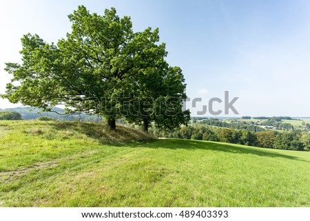 Cultivated landscape with trees