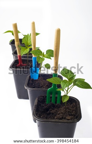 cultivation of pepper and young seedlings with gardening tools on a white background - stock photo