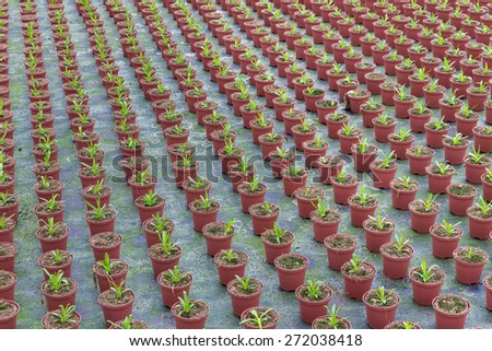 Cultivation of small indoor plants in a Dutch greenhouse - stock photo