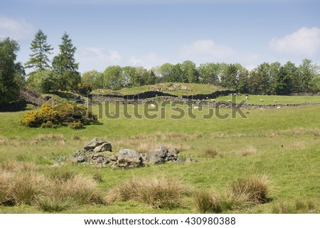 Cumbria field with dry stone walls and sheep - stock photo