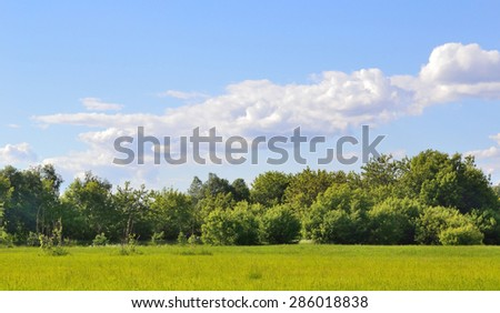 cumulus clouds gathered over the edge of the forest  - stock photo