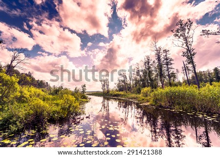 Cumulus clouds over the forest lake where ducks. Image in the orange-purple toning - stock photo
