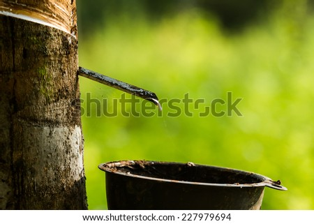 Cup hanging on rubber tree to pick up rubber liquid. - stock photo