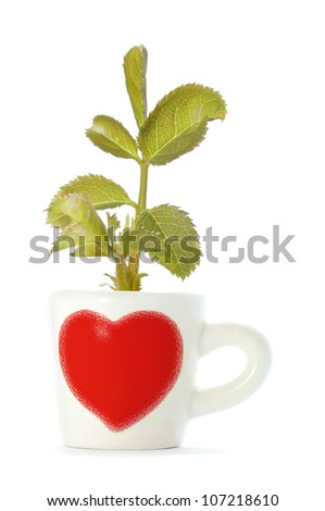 cup of tree .save the green world. - stock photo
