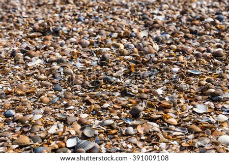cups a sea of bivalve