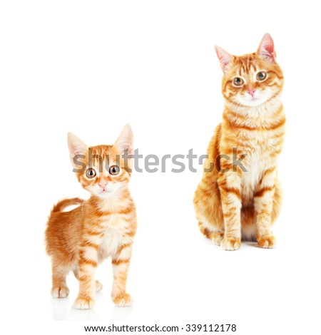 Cure red cats isolated on white - stock photo