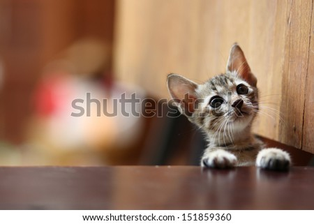 curiosity cat want to come in the room - stock photo