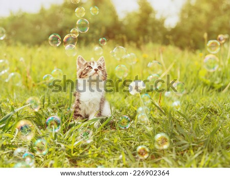 Curiosity little kitten looking at soap bubbles on summer meadow. Image with sunlight effect. - stock photo